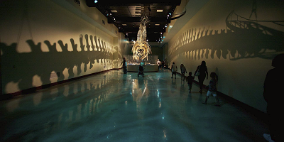 A display at the Natural History Museum has polished concrete floors installed.